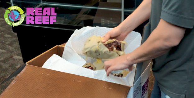 Unboxing Real Reef Rocks