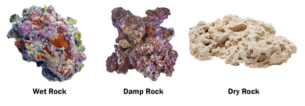 Types of live rock
