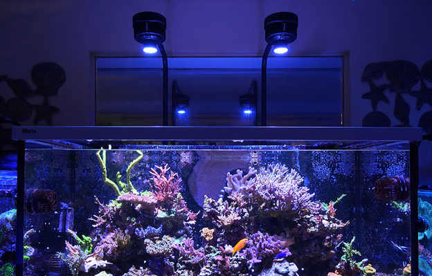 Kessil A500X LED over a reef tank