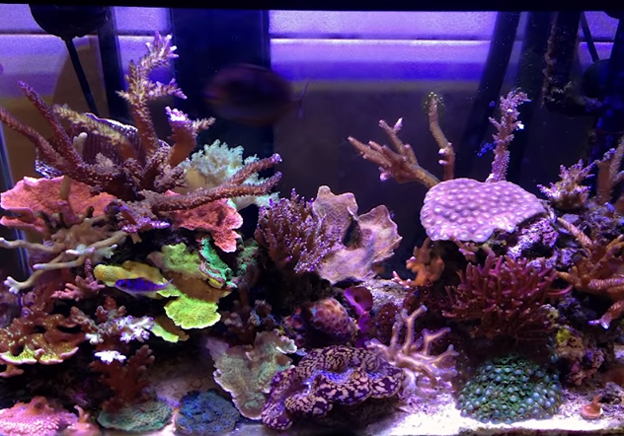 Canister filter on traditional saltwater aquarium