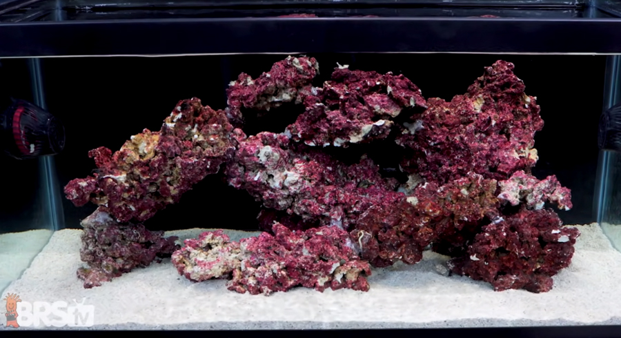 Real Reef aquscape