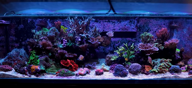 Kessil AP9X over the BRS160 aquarium