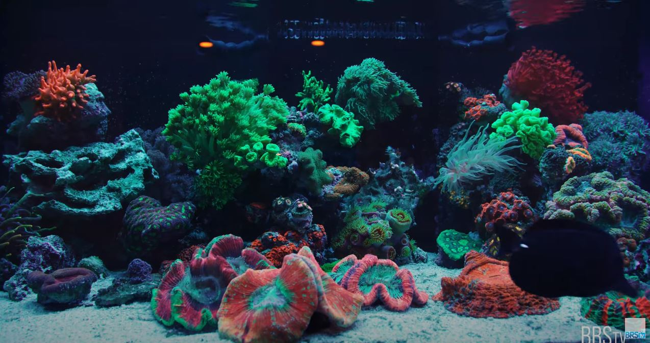 Jen's corals