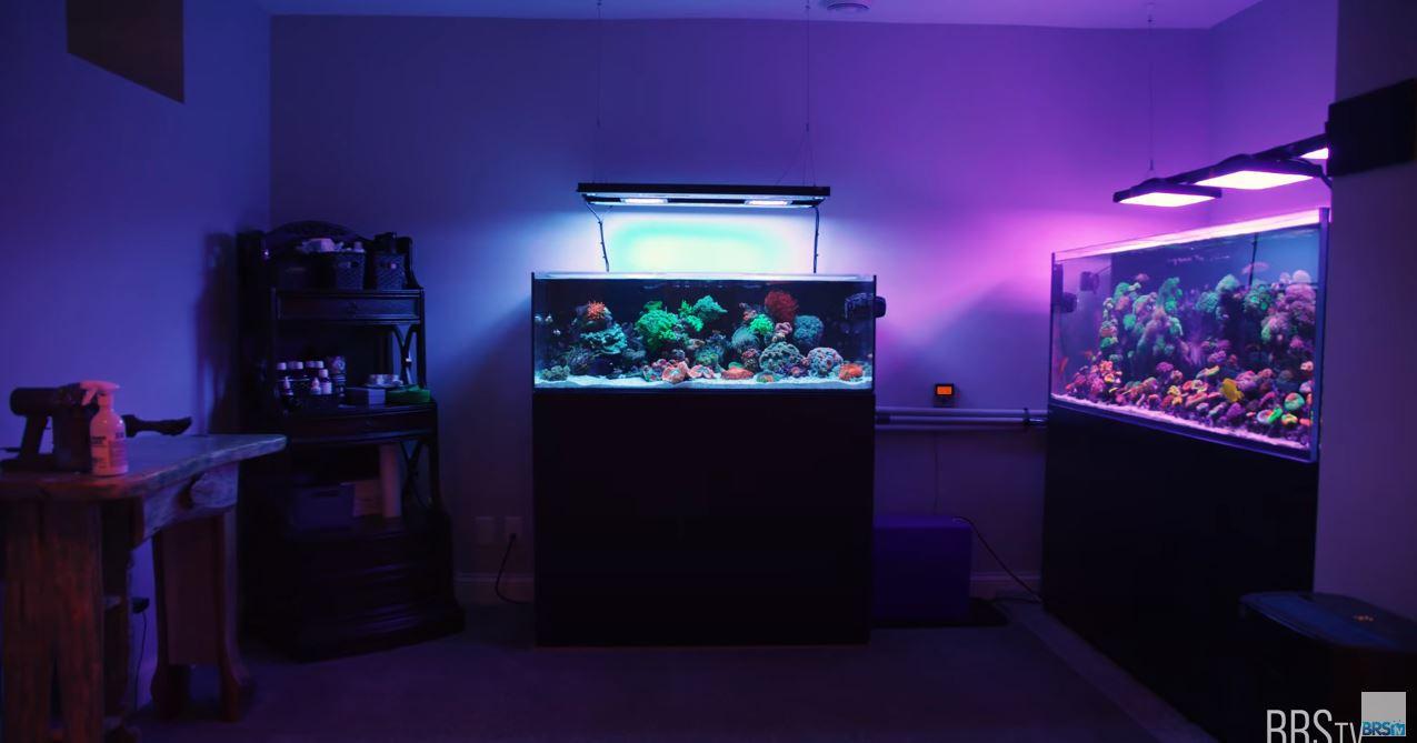 WaterBox Mixed Reef Tank