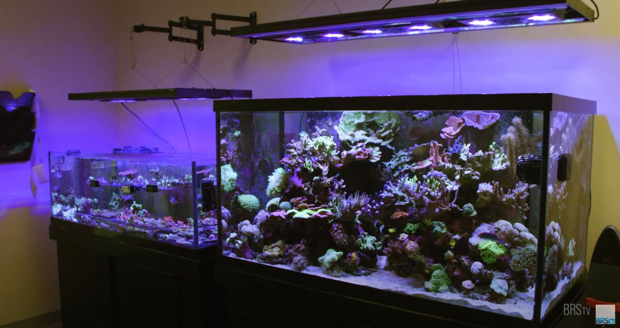 James' Mixed Reef Tank and Frag System
