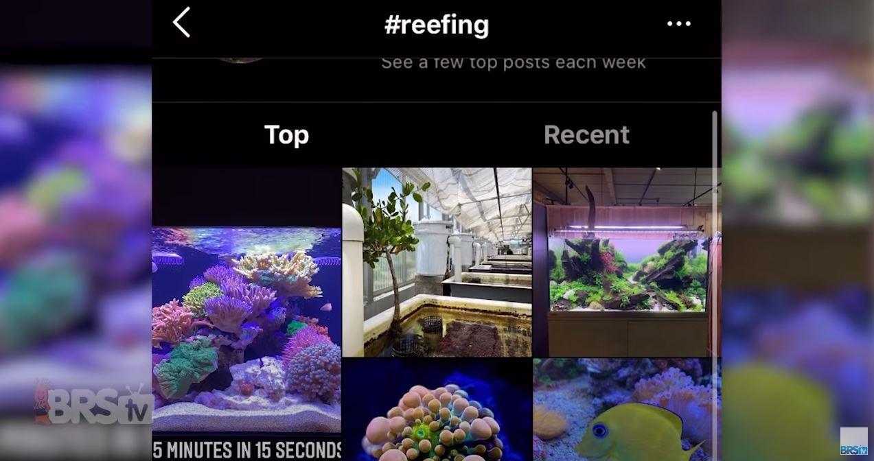 #reeftank on Instagram