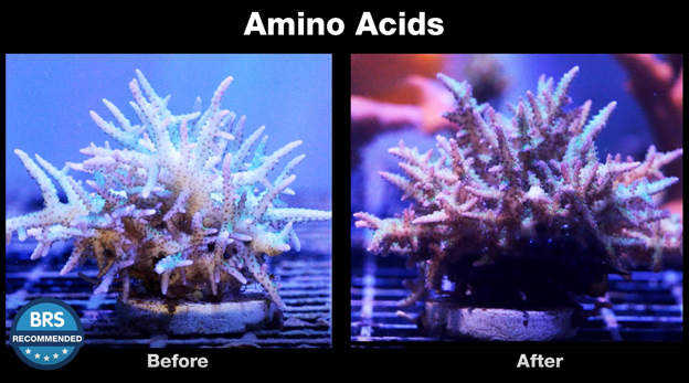 Before and after shot of corals being dosed with CoralAmino