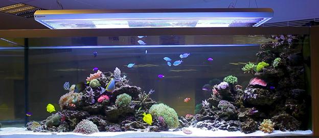 Successful reef tank