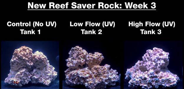 Week 3 - new dry rock