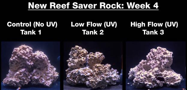 Week 4 - new dry rock