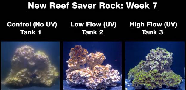 Week 7 - new dry rock