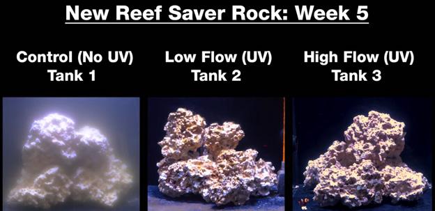 Week 5 - new dry rock