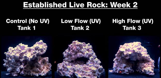 Week 2 - Old established rock