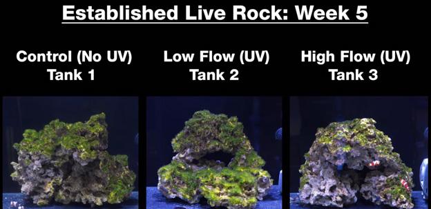 Week 5 - Old established rock