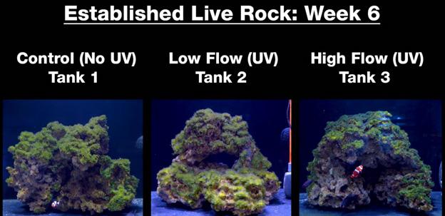 Week 6 - Old established rock