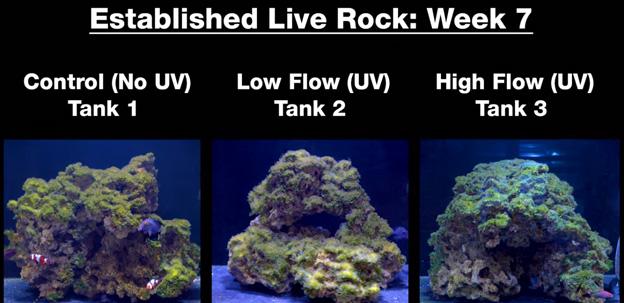 Week 7 - Old established rock