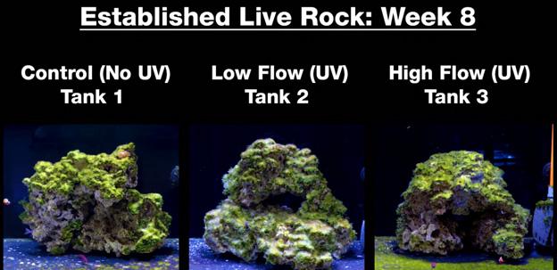 Week 8 - Old established rock