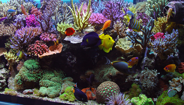 Ideal reef tank with mature sps corals