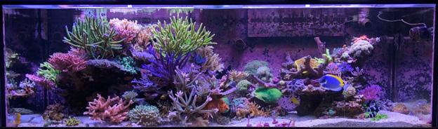 Terence Fugazi's Reef tank