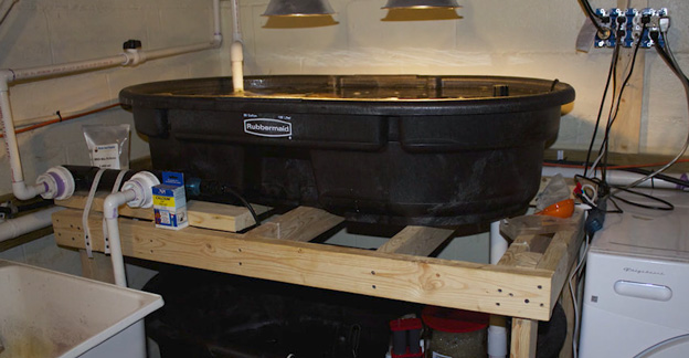 Rubbermaid vats in fish room with utility sink