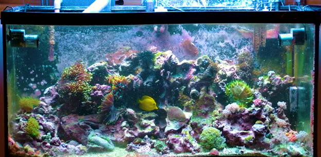 Ryan's first reef tank