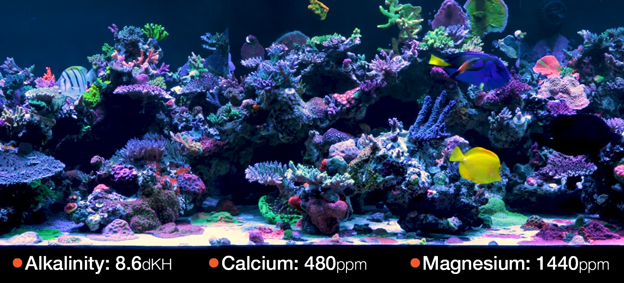 World Wide Corals (WWC) Reef Tank