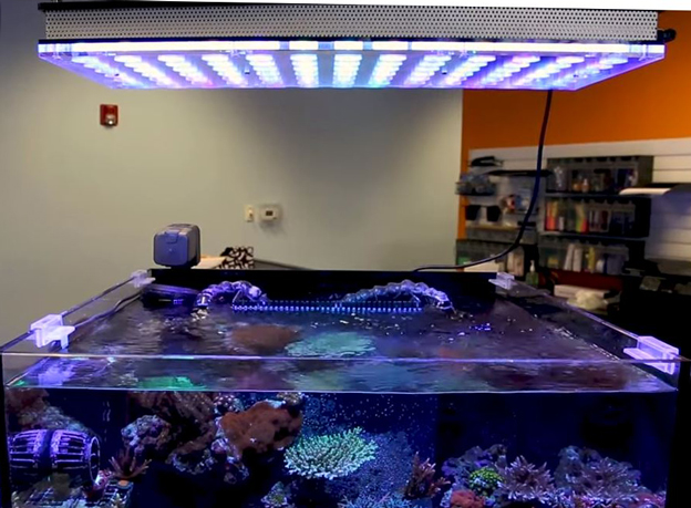 Orphek Atlantik LED light over BRS office tank