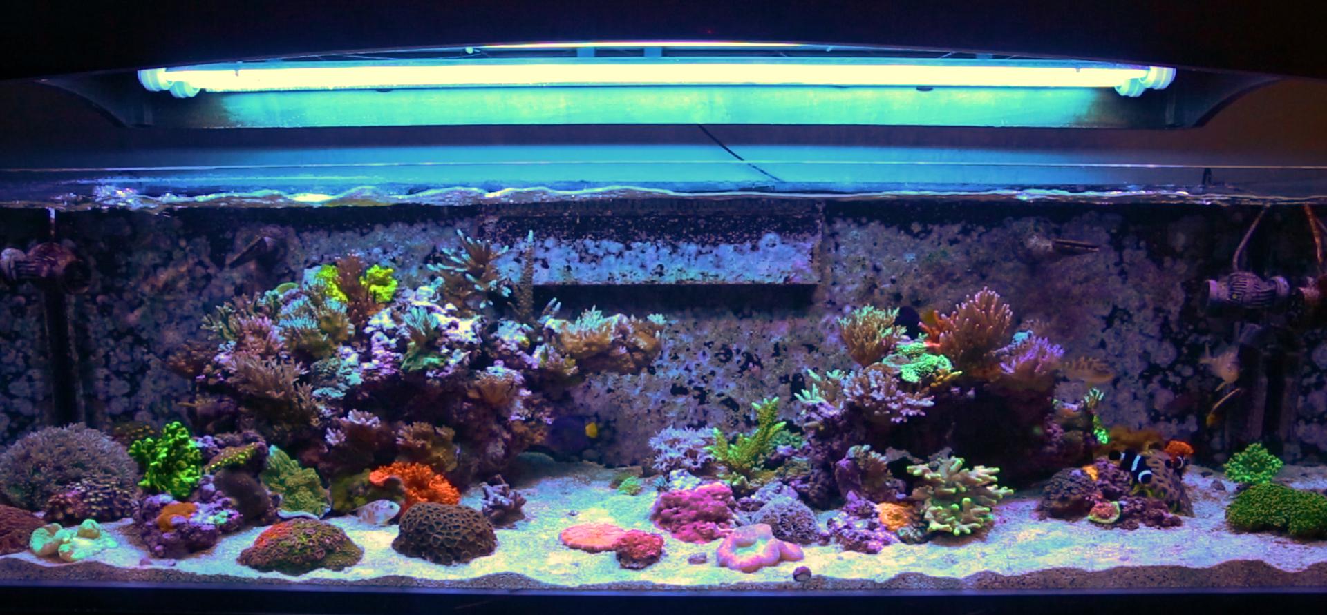 BRS160 Aquarium