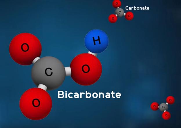 Bicarbonate Molecule