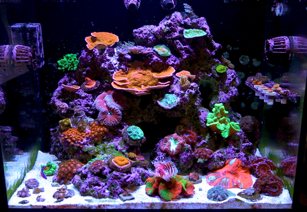 LED lit Reef Tank