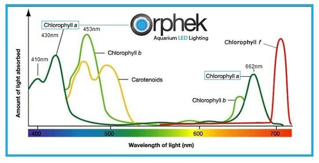 Orphek Optimal Coral Wavelength Graph