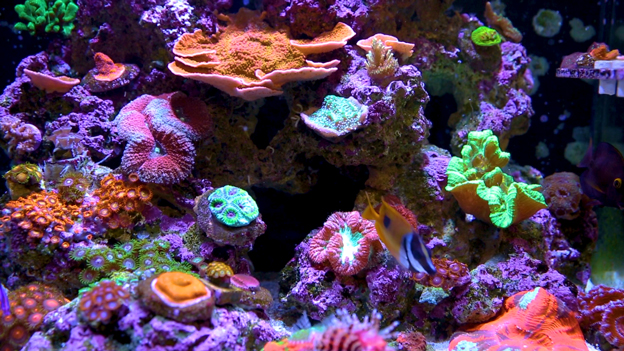 Colorful Reef Aquarium from BRS Office