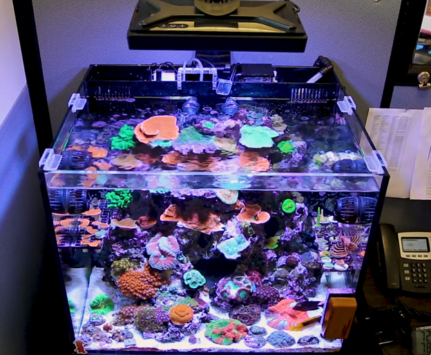 Radion LED over reef tank