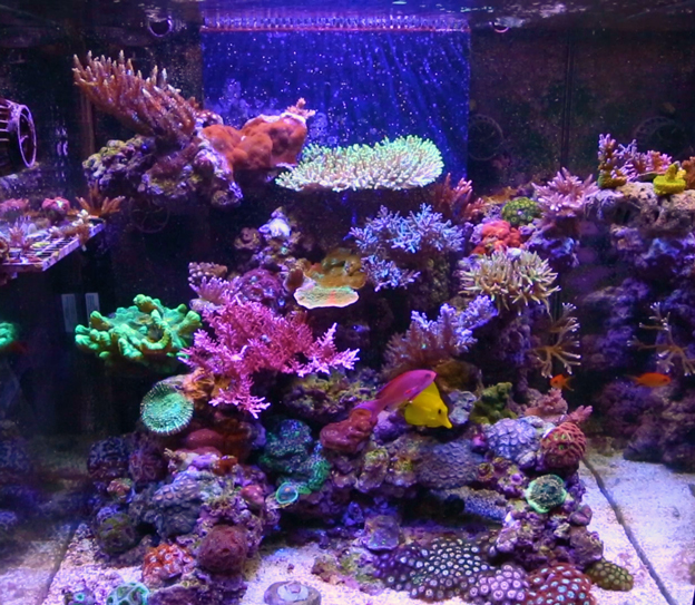 Mixed reef aquarium lit with LED light