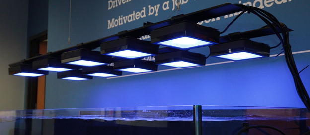 EcoTech Marine Radion XR15s mounted over BRS lobby tank