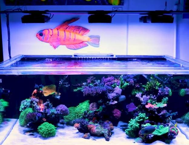 WWC 300 gallon mixed reef display