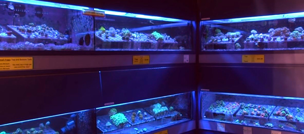 Coral tanks in fish store