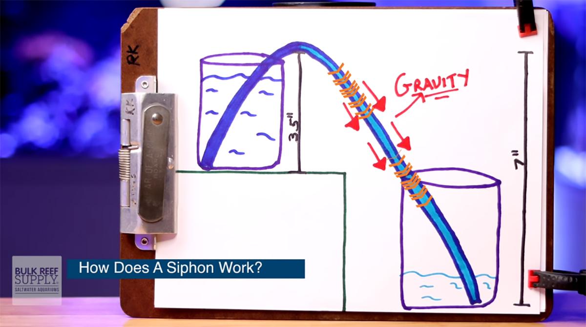 Siphon diagram