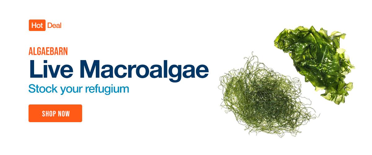 Shop Algaebarn Live Macroalgae