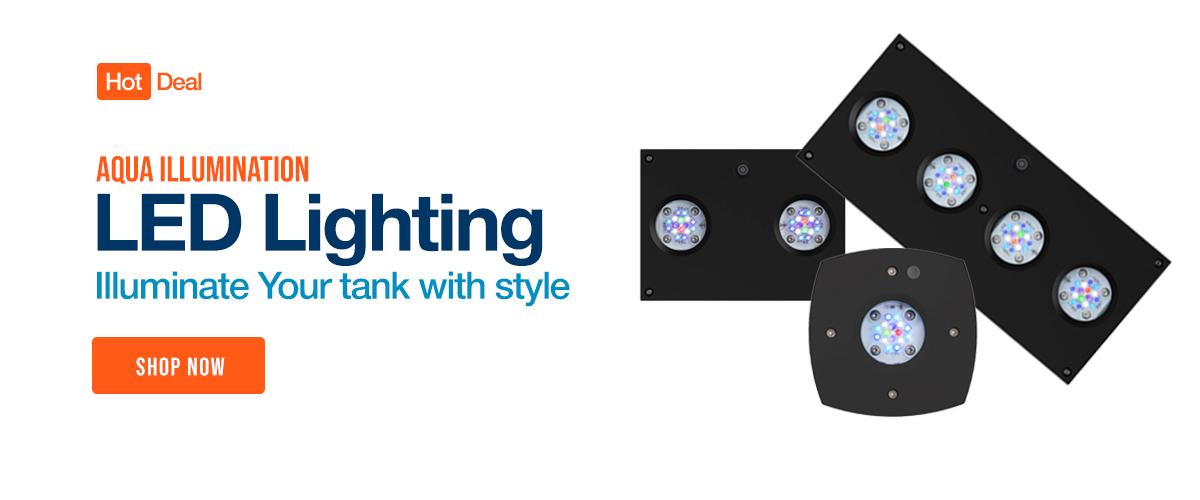 Shop Aqua Illumination Lighting