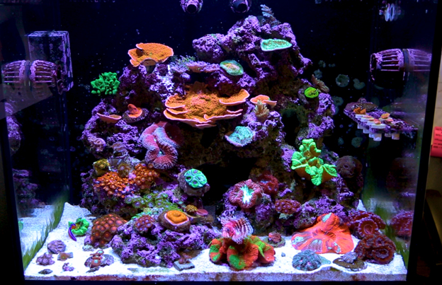 LED lit reef tank at BRS office