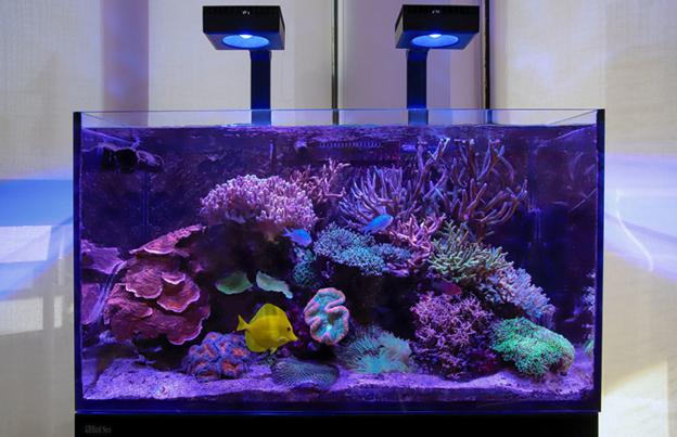 ReefLED over a mature reef tank
