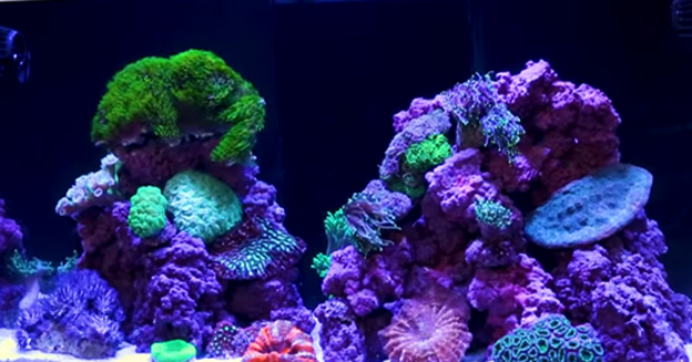 Red Sea Reefer 250 with mature corals