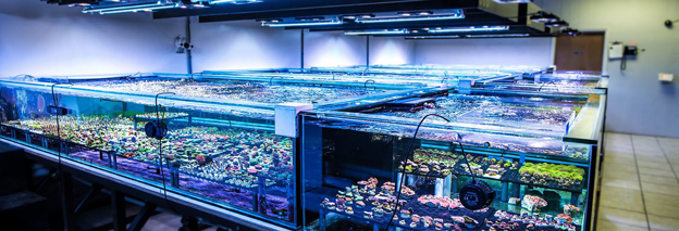 World Wide Corals Farm Systems