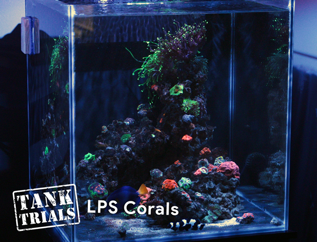 Ultra Low Maintenance LPS Coral Tank