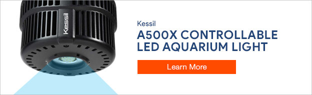 Kessil LED Lighting