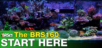 Start a Saltwater Aquarium with BRStv and 52 Weeks of Reefing