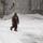 Thumb_40_1422412390-snowstorm_bushell_01272015_0052.jpg