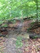 Thumb bernheim trail   louisville