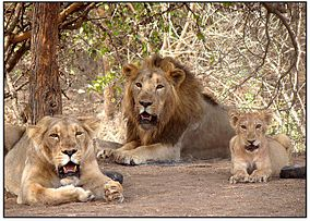 Hot Destination at Gir, India